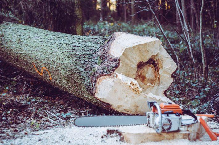 Arborist – en kunnig trädfällare